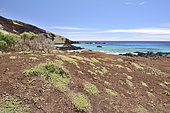 The shore at Ovahe with its creek, endemic flora zone in danger, Easter Island, Chile