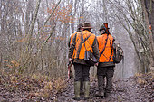 Hunting big game, the hunters go to the post, Rhine forest, Alsace, France