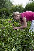 Girl cutting Rudbeckia