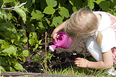 Girl watering tomato plant