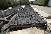 Briquettes made from charcoal dust drying Restart Africa, Gilgil, Kenya