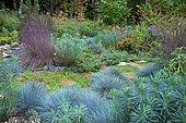 Little Bluestem (Schizachyrium scoparium) 'Blue Haven', Blue Fescue (Festuca glauca) 'Intense blue', terracotta surrounded by Kidney weed (Dichondra repens), Euphorbia (Euphorbia characias), Mint shrub (Elsholtzia stauntonii), garden in autumn, Ariège, France