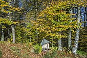 Decoration, garden in autumn at the entrance of an undergrowth, Ariège, France
