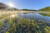 Sun and morning mist on Lake Ambleon, Jura, Bugey, Ain, France