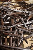 Vanilla pods drying in the Vanilla Valley, Tahaa, Leeward Islands, Society Islands, French Polynesia