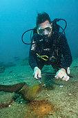Plongeur libérant une Murène châtaigne (Gymnothorax castaneus) pris à l'hameçon, La Paz, Baja California Sur, Mexique