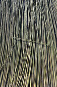 Drying of grey rushes or sedges (Lepirona articulata), Patthalung, Tale Noi, Thailand