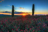 Toscana flowers, Toscana, Italy