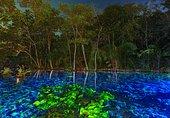 Blue Springs. underwater light paint, Bonito, Brazil
