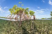 Mangrove island in split view, Jardines de la Reina National Park, Cuba