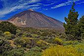 Volcan Teide, Parc National du Teide, Île de Tenerife, Iles Canaries.