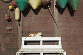 Domestic cat (Felis silvestris catus) at a fisherman's cottage at the San Miguel beach. San Miguel de Cabo de Gata, Nature Reserve Cabo de Gata-Nijar, Almeria province, Andalusia, Spain.