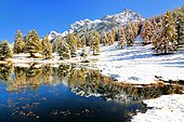 Lake Schwarzsee or Lai Nair with snow-covered larch forest, Tarasp, Engadin, Graubünden, Switzerland, Europe