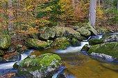 Ilse mountain stream, autumn, Ilse valley, Harz National Park, Saxony-Anhalt, Germany, Europe