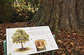 Panel at the foot of a plane tree, botanical garden, Science Garden, Arquebuse Park, Dijon, Cote d Or, France
