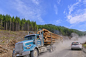 Timber transport in the rainforest of Vancouver Island. 90% of the island's rainforest has been harvested and beautiful trees are exceptional - Vancouver Island - British Columbia - Canada