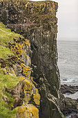 The Látrabjarg cliff is home to many bird colonies: Atlantic Puffin, Black-legged Kittiwake, Northern Fulmar, etc. Iceland