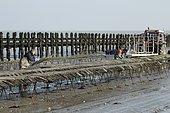 Oyster farmers fixing oyster bags in Cancale, Brittany, France