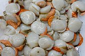 Scallop nuts (Pecten maximus) at the fish market of Fécamp fishing port, Normandy, France
