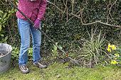 Garden cleaning in early spring, Pas de Calais, France.