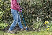 Gardener aerating his land with a rotating claw, spring, Pas de Calais, France