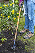 Cleaning the garden with a claw, early spring, Pas de Calais, France.