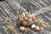 Basket filled with eggs on a garden table, spring, Pas de Calais, France