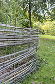 Bamboo palisade in a garden, autumn, Somme, France