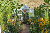 Greenhouse in a garden, summer, Moselle, France