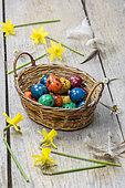 Oeufs de caille colorés pour Pâques, dans un panier en osier et jonquilles.