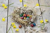 Oeufs de caille colorés pour Pâques, dans un nid et jonquilles.