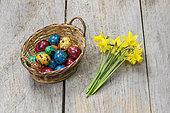 Oeufs de caille colorés pour Pâques, dans un panier en osier et bouquet de jonquilles.