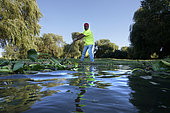 Hommes retirant des jacinthes d'eau (Eichhornia crassipes) d'un lac. C'est une plante aquatique originaire du bassin amazonien et une espèce envahissante extrêmement problématique en dehors de son aire d'origine. Si elle n'est pas contrôlée, la jacinthe d'eau couvrira entièrement les lacs et les étangs, cela affecte considérablement le débit d'eau, empêche la lumière du soleil d'atteindre les plantes aquatiques indigènes, qui meurent souvent. Tejo (Tage), Portugal