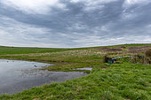 Hunting hut on a stretch of water, spring, Pas de Calais, France