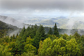 Summits of Northern Vosges in summer, Regional Natural Park of Vosges du Nord, France