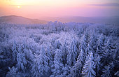 Snowy peaks of Northern Vosges, Regional Natural Park of Northern Vosges, France