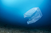 Plastic bag floating above seabed, Lembeh Strait, Indonesia