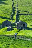 Cutting the grass, Cabaña pasiega and meadows, Miera Valley, Valles Pasiegos, Cantabria, Spain, Europe