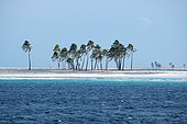 Coconut Grove on Clipperton Atoll (2005 expedition)