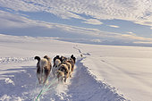 Dog sledge hitch in the hills, East Greenland