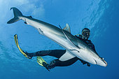Dive guide holding a silky shark in tonic immobilization, Queen's Gardens National Park, Cuba