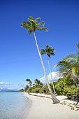 Bois Jolan beach, Sainte-Anne, Guadeloupe, French West Indies