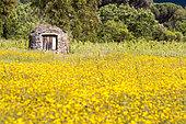 Old well, National Nature Reserve of the Plaine des Maures, Vidauban, Var, France
