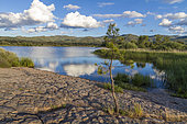 Lac des Escarcets, National Nature Reserve of the Plaine des Maures, Vidauban, Var, France