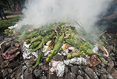 Foods arranged on hot stones, traditional Kanak oven with braising. Feast of the new yam. Tribe of Gohapin. New Caledonia.