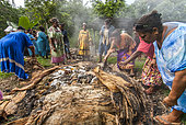 Kanak women opening a traditional oven with cooking Bougna to smothered. Feast of the new yam. Tribe of Gohapin. New Caledonia.