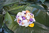 Kanak traditional dish before cooking in banana leaves, bougna, traditional dish kanak stewed and accompanied by meat. Feast of the new yam. Tribe of Gohapin. New Caledonia.