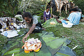 Kanak women preparing bougna, traditional Kanak dish stewed and served with meat. Feast of the new yam. Tribe of Gohapin. New Caledonia.