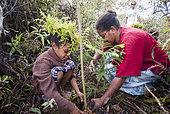 Femme et jeune fille kanak plantant un Araucaria (Araucaria columnaris). Plantation à la tribu de Gohapin en partenariat avec le WWF. Nouvelle-Caledonie.
