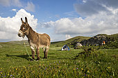 Donkey on the plateau of Font d'Urle, Vercors Regional Natural Park, France